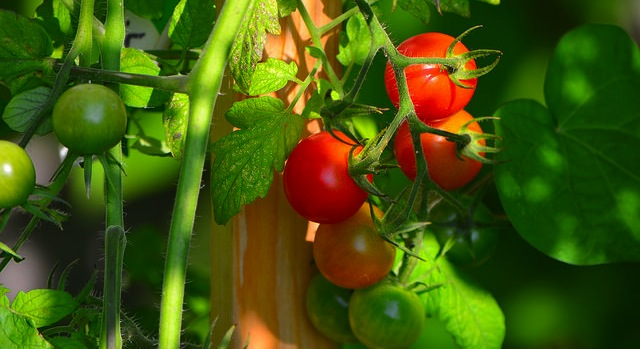 2018 Vegetable Varieties for Gardeners List