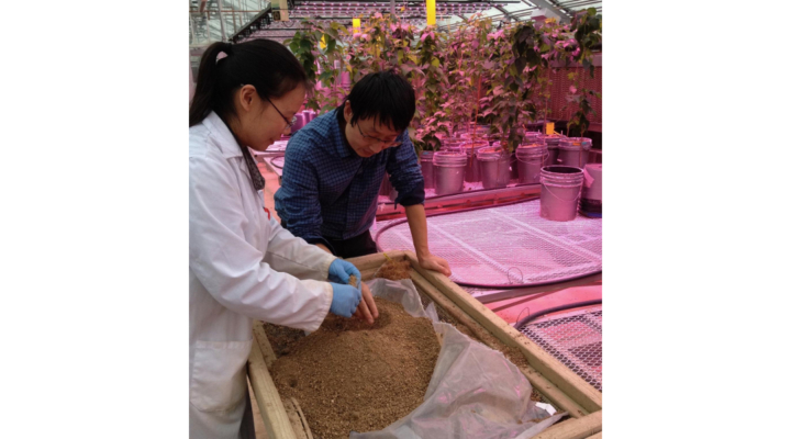 Growing crops that need less fertilizer