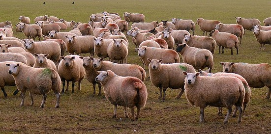 USDA announces Lamb Board appointments