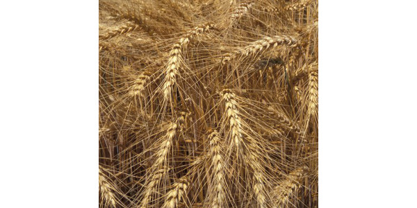 Pest and field crop management update meetings
