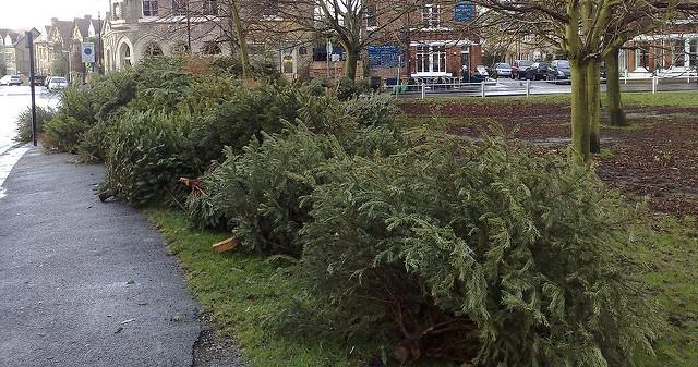 Tips for safe Christmas tree disposal