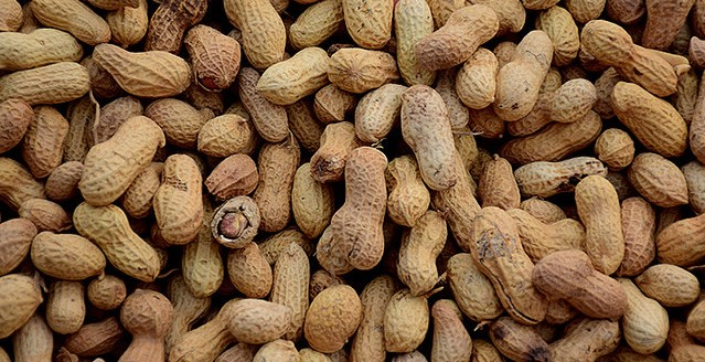 National Peanut Board appointments
