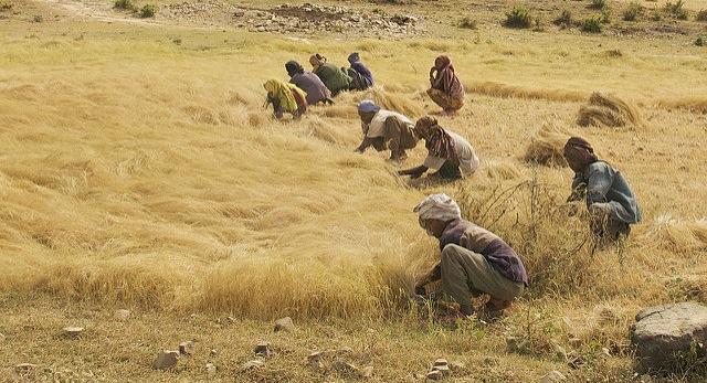 Can gene editing help solve global hunger?