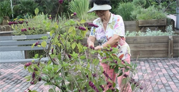 Extension workshops cover gardening, cooking