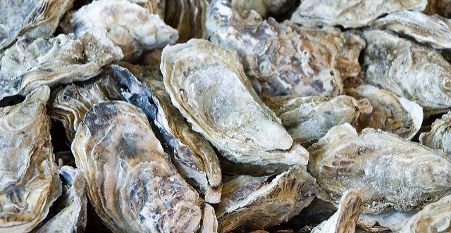 Oyster reefs could help fight erosion