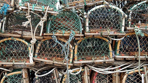 Hearings scheduled for changes to lobster rules
