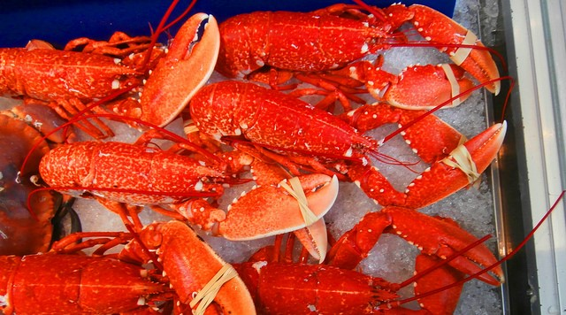 Maine opposes changes to lobster recording