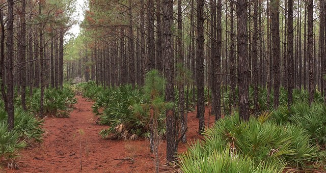 Florida forestry generates $13B in sales