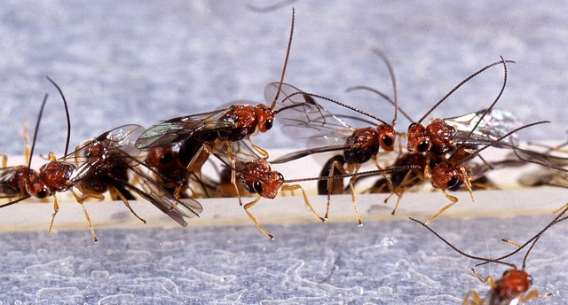 Pest quarantine lifted in LA County