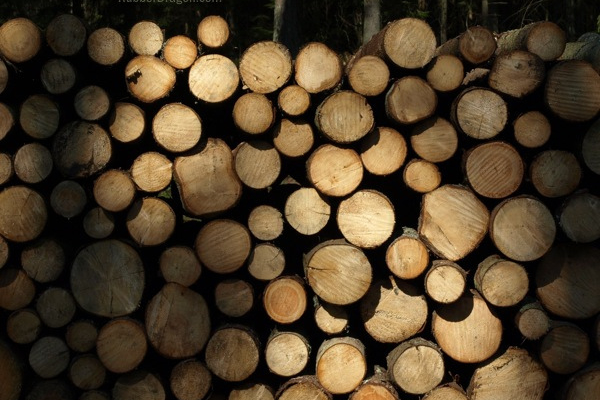 Hardwood puplwood stumpage prices drop significantly from last year