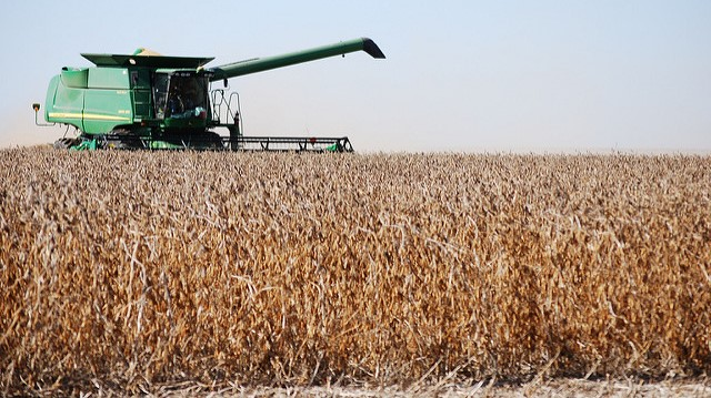Record crop for soybeans, peanuts, canola, hops
