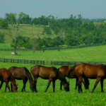 University of Kentucky Ag Equine Programs will host a Pastures Please!! pasture maintenance workshop from 6 to 8 p.m. EST, Jan. 22, at the Scott County Extension office, located at 1130 Cincinnati Road in Georgetown. (Courtesy of University of Kentucky)
