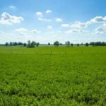 A field of alfalfa in Scott County. (PHOTO: Matt Barton, UK Agricultural Communications)