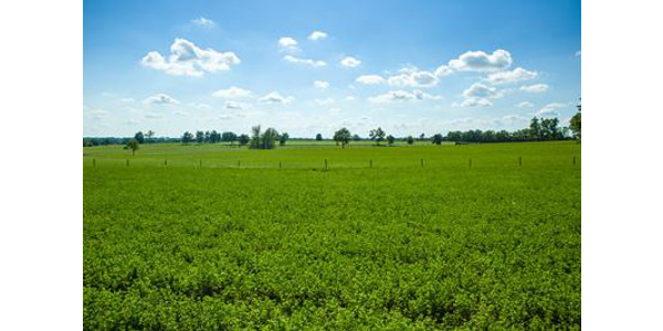 A field of alfalfa in Scott County. (PHOTO: Matt Barton, UK Agricultural Communications)