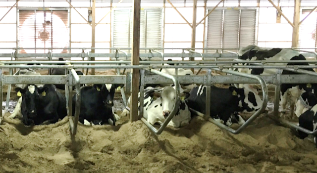 Second Annual Cow Comfort Conference