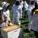 Those interested in learning about how to keep honey bees are encouraged to register for Nebraska Extension's introductory beekeeping workshops. (Courtesy of UNL)