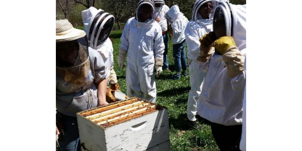 Introductory beekeeping workshops