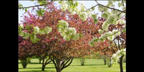 The Myra Arboretum