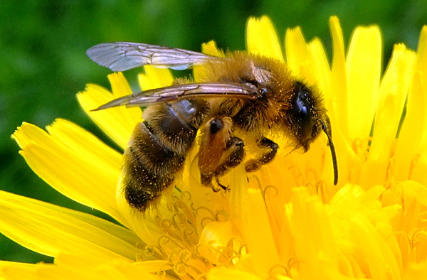 Bateman bill to protect bees from pesticides