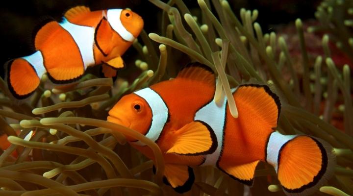 Feeding Nemo