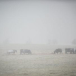 coldcows
