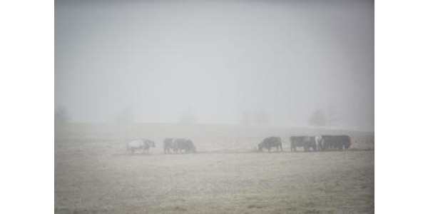 Extended cold spells pose risks to livestock