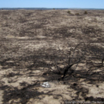 Sandhills grassland that was burned in a wildfire in 2012. (Photo copyright Chris Helzer/The Nature Conservancy)