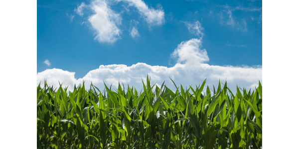 The workshops will integrate corn production, harvest, storage, marketing and risk consideration information. (Pixabay Photo)