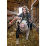 While YQCA is a certification mandated by some pork processors and livestock exhibitions, it is also a helpful educational program that seeks to provide youth livestock exhibitors and producers with an educational platform that will enhance their knowledge of livestock species and quality animal care. (Courtesy of MSU Extension)