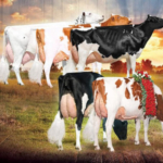 Attend the Wisconsin Holstein Convention hosted by District 5 Holstein Breeders, February 16-17, 2018 at the Wintergreen Resort in Wisconsin Dells. (Courtesy of Wisconsin Holstein Association)