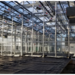 A new four-bay greenhouse expansion will help get cutting edge wheat genetics into the hands of Kansas farmers, faster. (Courtesy of Kansas Wheat)