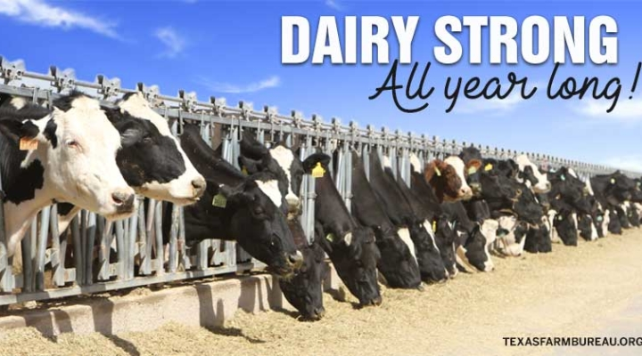 Dairy strong. All year long.