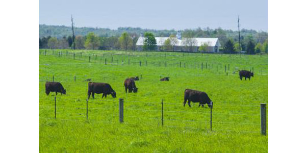 Sound fences are vital to any livestock operation. (PHOTO: Matt Barton, UK Agricultural Communications)