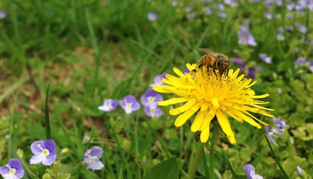 Beekeeping classes open for registration