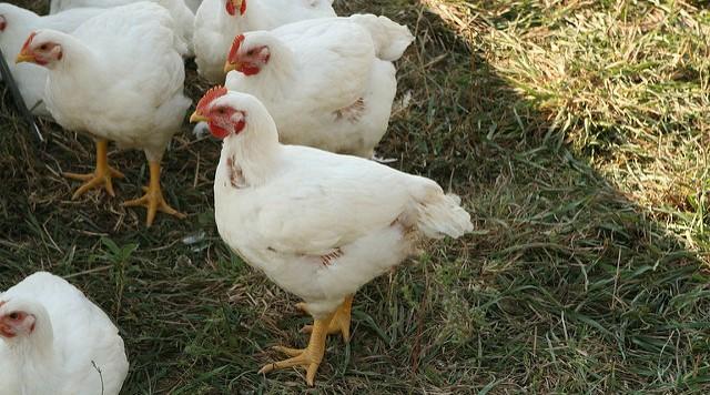 Chicken Marketing Summit 2018