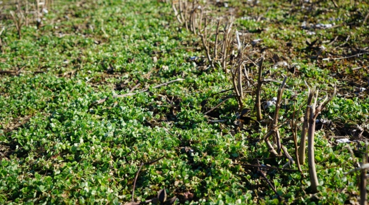 The long-term economic impact of cover crops