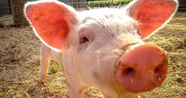 Student arrested for fatally shooting pig