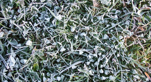 Cold snap brings freeze, frost warnings to Calif.