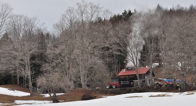NYS Grown & Certified expands to maple industry