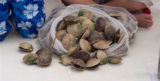 As fishermen age, new scallop harvesters needed