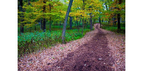 illinois forest