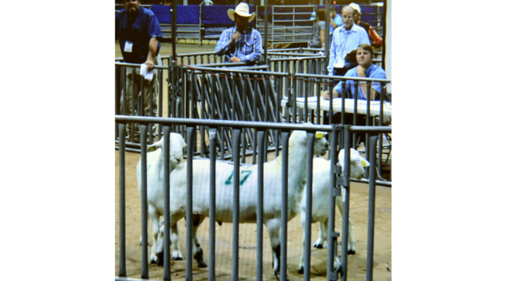 Texas Sheep and Goat Expo
