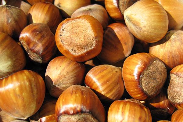 Rutgers researchers develop better hazelnut tree