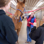 Students study horses in the colt barn with equine Assistant Professor Casie Bass, center, at the UW-River Falls Campus Farm. Staff file photo by Kathy M Helgeson.