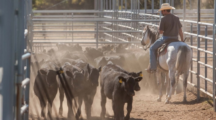 Beef quality workshop offers ranchers certification | Morning Ag Clips