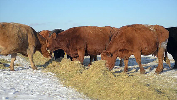 Farmers' dry winter worries getting stronger