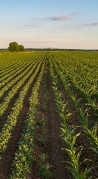 A call for responsible investment in agriculture