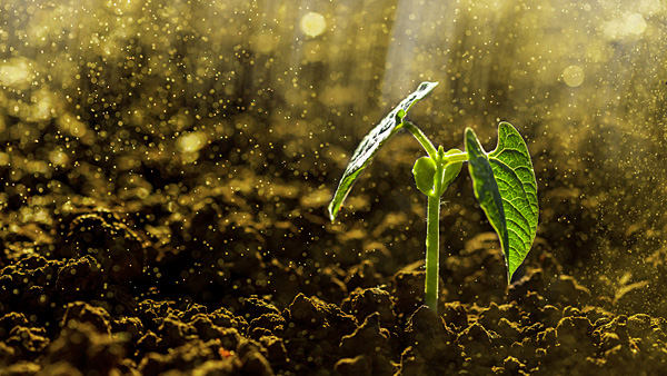 Conference to discuss enriching soils, water quality
