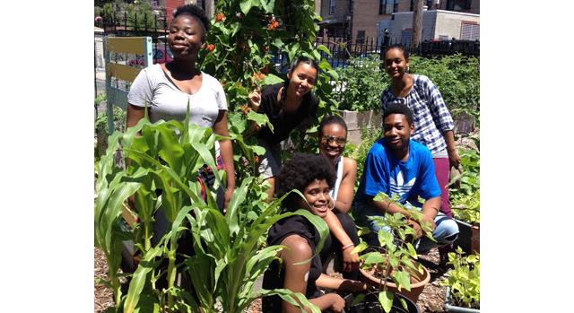 Tips for community gardens