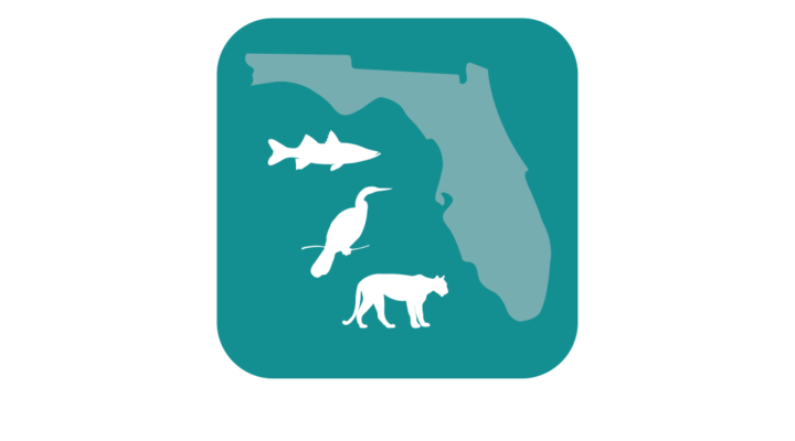 Report fish & wildlife sightings with FWC's new app